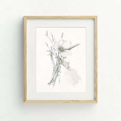 Botanical illustrated floral art card by Tasmanian artist Lara Hardy From Billie Hardy Creative