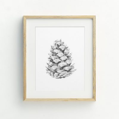 Pinecone nature hand drawn illustrated Art Print by Billie Hardy Creative